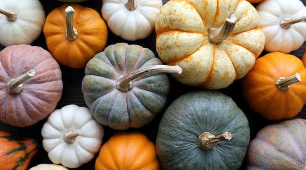pumpkins and squashes