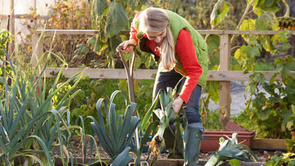 allotment ideas
