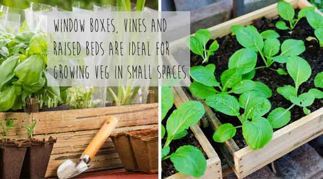 vegetable garden grow your own ideas