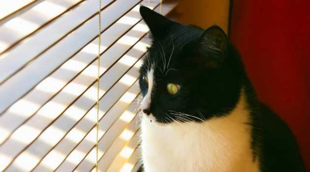 venetian blinds and cat